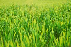 green (.:: Maya ::.) Tags: rhodope earth  terra tierra green grass mayakarkalicheva mayaeyecom  maya eye wwwmayaeyecom