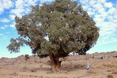 Desert Voyages Convoy  wwww.desertconvoy.9f.com (Djanet Desert Convoy) Tags: travel sahara algeria desert 2009 touareg voyages tassili tadrart djanet desertconvoy