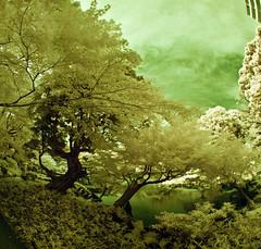 Kyu Furukawa Garden panorama (aeschylus18917) Tags: park trees panorama lake japan landscape ir tokyo japanesegarden pond nikon scenery d70 infrared   20mm nikkor   f28d kyufurukawateien  20mmf28d 20mmf28af nikkor20mmf28d  danielruyle aeschylus18917 danruyle druyle