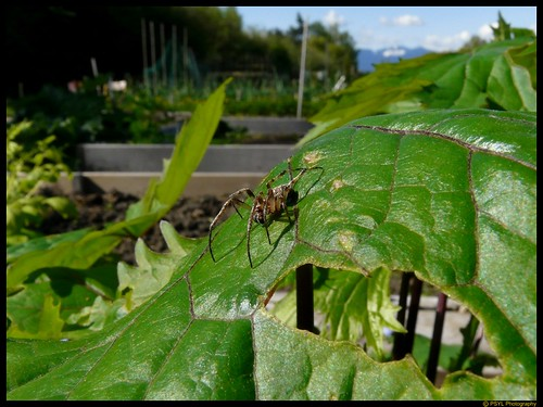 Spider in the Community Garden