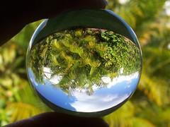Upside down world (far horizons) Tags: light plants distortion reflection glass cmwdgreen mtrtrophyshot