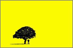 Finding shade in a yellow field. (yamstar1(Internet problems).) Tags: tree yellow shropshire olympus minimal minimalism minimalistic abigfave yamstar1