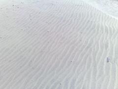 windswept (juanita) Tags: fortfunston n95