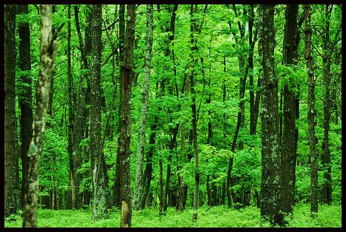 Greenary near Bushkill falls