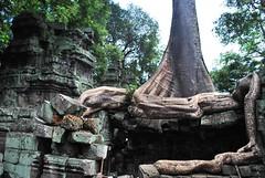 DSC_0569 (ASR Photos) Tags: tree tower abandoned stone temple mural ruins cambodia khmer buddhist roots buddhism jungle siem reap damage khan angkor wat buddah rubble preah overrun