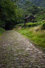 _004 (jacquechong) Tags: china waterfall hangzhou teaplantation