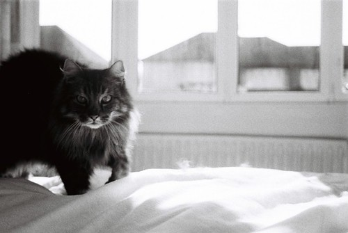 bw cat 35mm canon eos barney