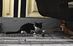 (Konstantinos Vasiliadis) Tags: bw cats white animals yellow contrast cat blackwhite eyes chair colours ground olympus greece 1745 e420