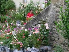 Fête des roses de Camont