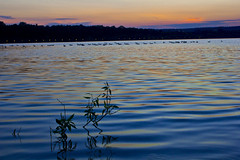 Peace on earth. (RyanKemmers) Tags: sunset ontario canada beach nature water canon peace wildlife ducks goose lakeontario