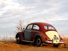 58 beetle (odinthewanderer) Tags: county vw bug volkswagen beetle 1958 kansas plains coronado heights saline kafer