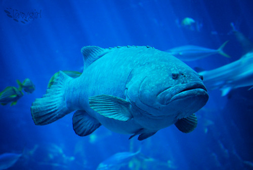 One_Big_Grouper[2009]