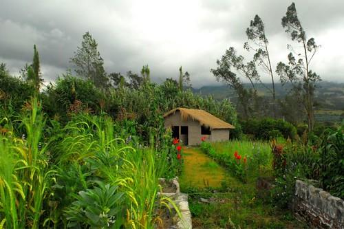 Ecuador-organic-garden