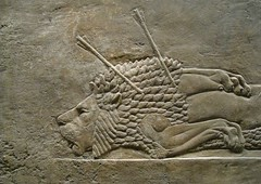 Assyrian lion hunt, British Museum (Niall Corbet) Tags: sculpture london iraq carving relief britishmuseum assyria assyrian