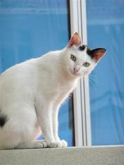 Me & My Neighbor's Cat #17 (ighosts) Tags: morning friends cat malaysia neighbor klang neighborscat