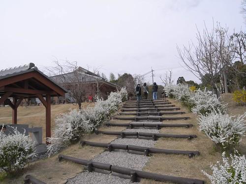 2009年-桜@山の辺の道-09
