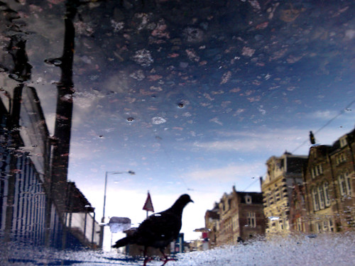 Reflections Of Amsterdam - Puddle Pigeon