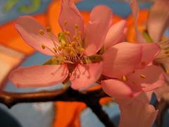 #32/09 (emasplit) Tags: flowers colours naturesfinest mywinners emasplit explore2009