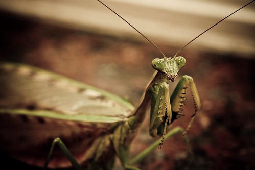 Famous Mantis Position