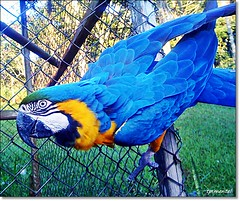 Arara (tpimentel) Tags: brazil minasgerais apple nature brasil rural hotel ipod phone natureza cellphone frias viagem brasileiro tania caipira roa iphone hoteis hotelfazenda pimentel caranda iphonephotography iphoneshots viagemdefrias iphoneographer taniapimentel tpimentel