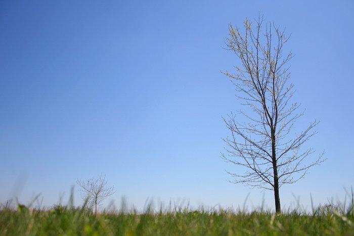04-23-tree2