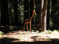 Giraffe Art in the Forrest
