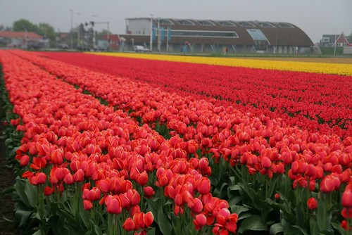 Egmond aan Zee by you.