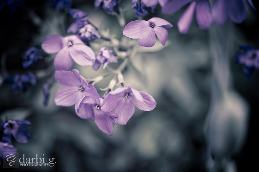 Darbi G Photography-engagement-photographer-_MG_0958