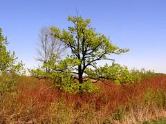 Spring landscape (m.kotiuk) Tags: landscape spring walk printemps spacer wiosna  pejza