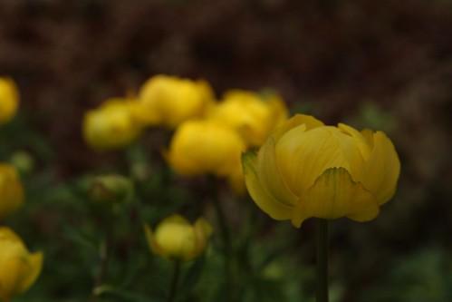 Lovely flower!