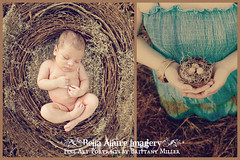 She has finally hatched!! (Bella Allure Imagery | Brittany Miller) Tags: baby bird moss infant nest newborn hatch storyboard