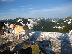 Summit Dogs