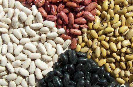 variedades de feijão