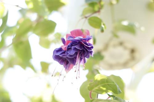 Botanical Garden Kyoto - 9