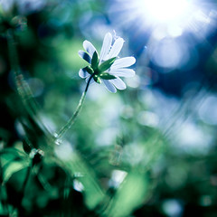 Up to the sun (bbanana) Tags: trip flowers sun nature woods russia