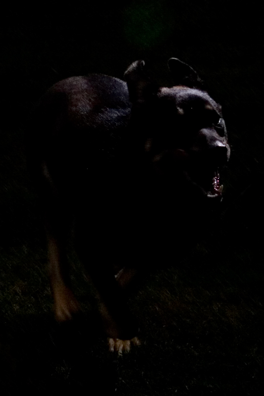 Dog-Nitemare_3125