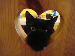 il_piccolo_kraat (ChinoBamPharmacy) Tags: black cat heart gatto cuore gordo felide