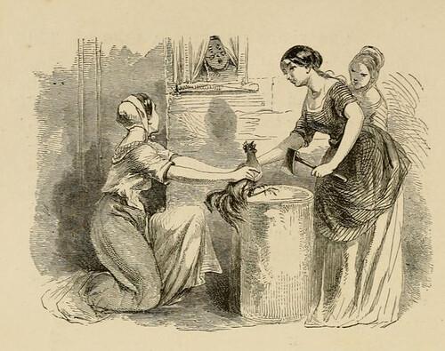 Ancillae et Gallus