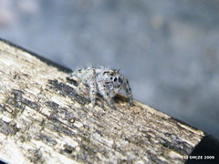 Itsy bitsy spider (dm|ze) Tags: macro nature handle spider arachnid finepix fujifilm 8legs fujifilms8100fd