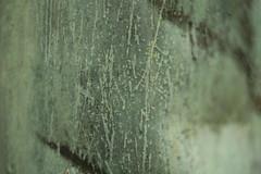 Dachrinne (pepperminded) Tags: texture surface structure copper dachrinne regenrinne oberflche textur kupfer stuktur