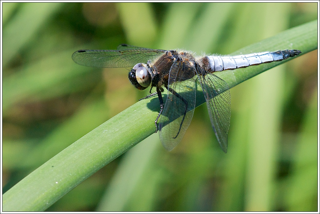 Photos de la Rencontre Macro Papillons & Libellules du Sud 2011 (21 & 22 Mai) 5751749196_fa6860c29b_o