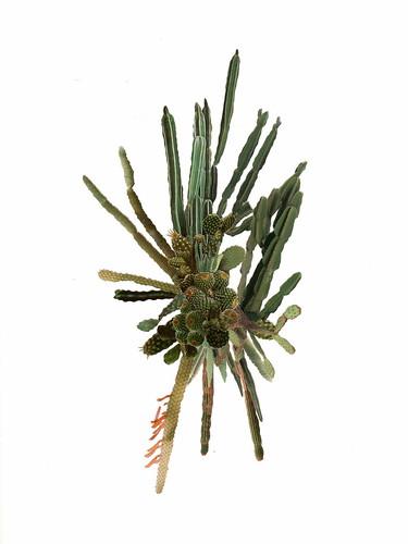 cactuscluster004