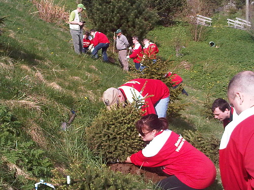 Molson Canadian Red Leaf Project - St. John's NFLD