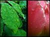 LES LARMES DU BONHEUR... (Gilles Poyet photographies) Tags: composition fleurs autofocus aplusphoto creativemindsphotography artofimages mygearandme ringexcellence rememberthatmomentlevel1 rememberthatmomentlevel2 rememberthatmomentlevel3
