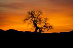 Sunrise, Santa Inez Valley