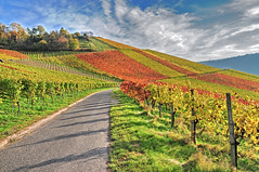 Autumn Vineyard (Habub3) Tags: travel autumn panorama nature colors germany landscape deutschland photo vineyard nikon herbst natur autumncolors andromeda landschaft hdr farben weinberg d300 herbstfarben mywinners abigfave colorphotoaward aplusphoto theunforgettablepictures habub3