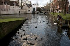 Minnewater (daveknapik) Tags: water birds animals belgium brugge ducks canals rivers bruges minnewater