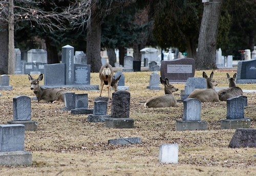 We came up on these guys during a walk in the cemetary...