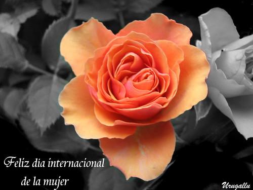 Feliz día internacional de la mujer por Urugallu.