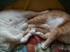 Kitty Feet (Gail S) Tags: cats window chair napping catsandwindows pinkyandthepuss